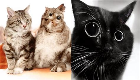 AI creates cats that don't - and probably shouldn't