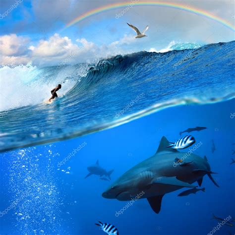 Surfer and wild shark underwater with rainbow on the sky