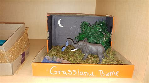 Biome Project | Mrs