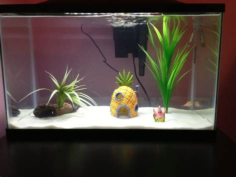 Is My Goldfish Bored Or Lonely? My Goldfish Has Always Had