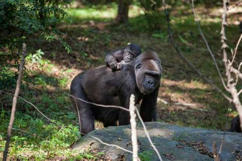Bronx Zoo | The Official Guide to New York City